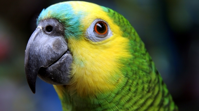 Abused and illegal parrots seized in Paraguay