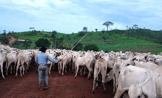 cowboy-cattle-road-brazil